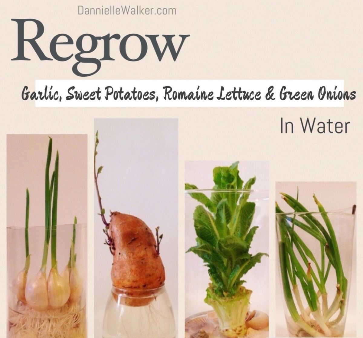 How to Regrow Vegatables in Water